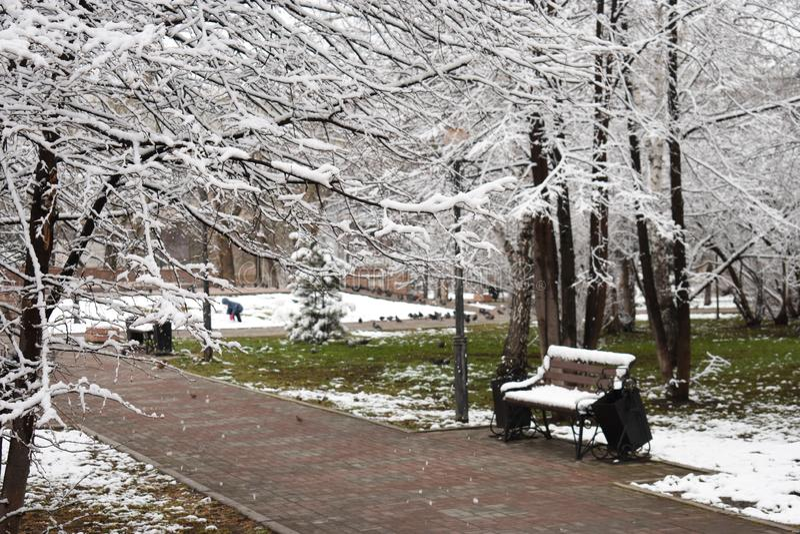 Neve e grama no parque foto de stock royalty free
