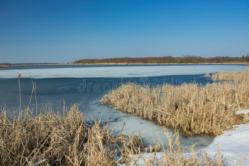 Neve e juncos secos na costa de um lago congelado Horizonte e céu azul foto de stock