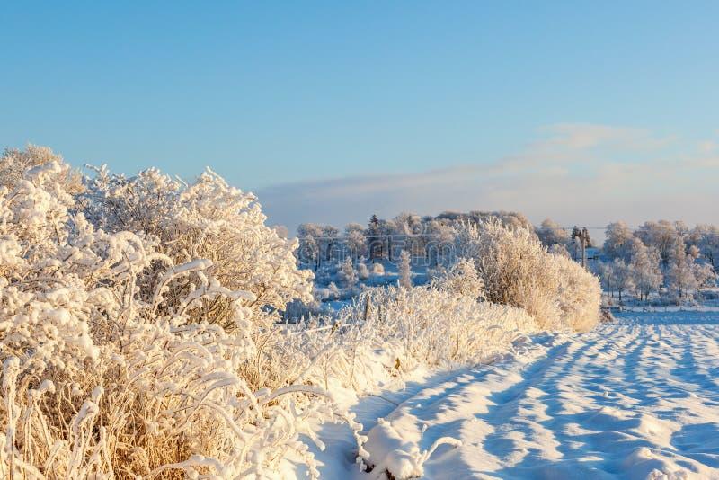 Neve e paisagem da geada fotos de stock