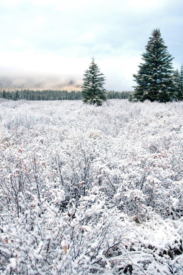 Neve e paisagem do inverno imagens de stock