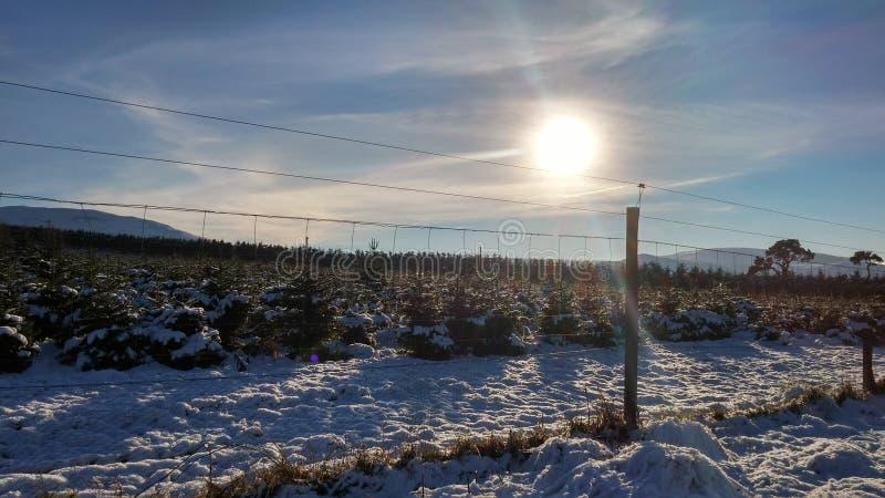 Neve e Sun oltre il recinto fotografia stock libera da diritti