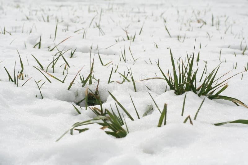 Neve ed erba fotografia stock libera da diritti