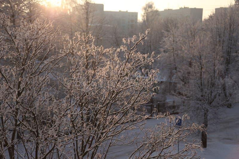 Neve em árvores na manhã fotos de stock royalty free
