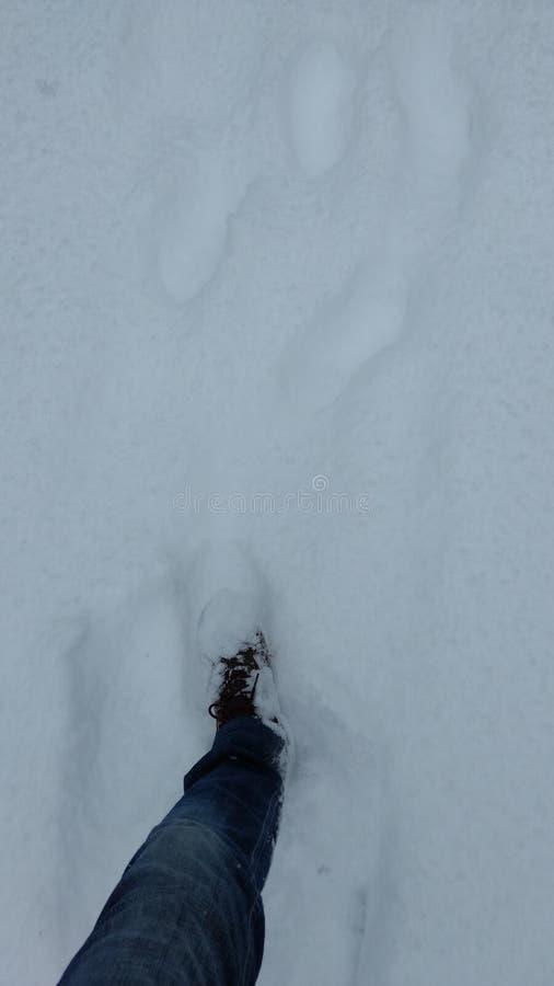 Neve em Canadá imagem de stock