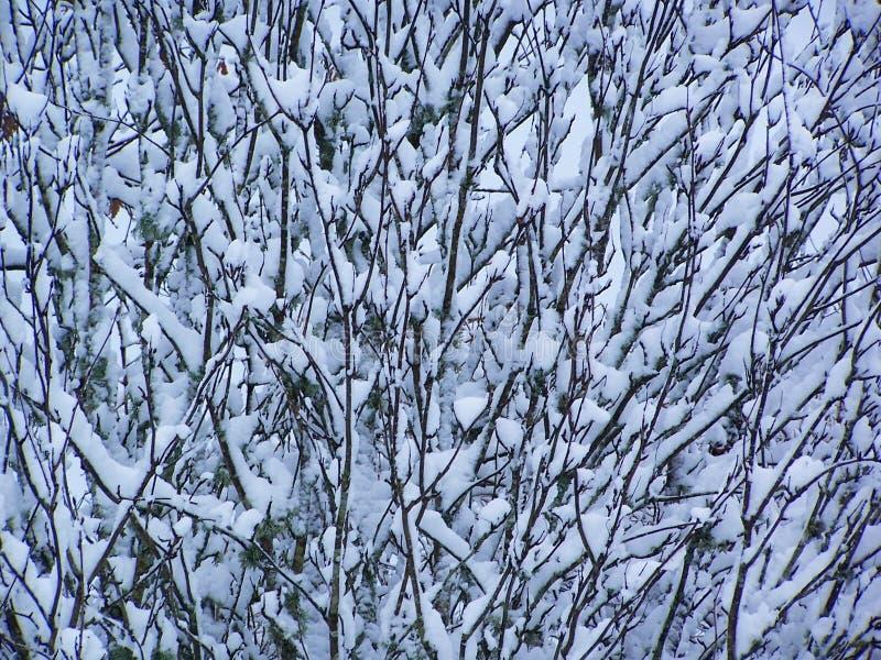 Neve em filiais fotografia de stock royalty free