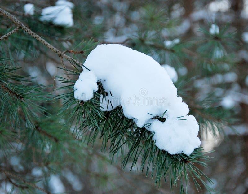 Neve em ramos de árvore imagens de stock royalty free
