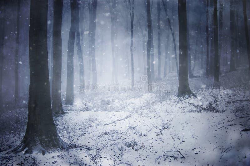 Neve em uma floresta escura congelada com flocos de neve fotos de stock