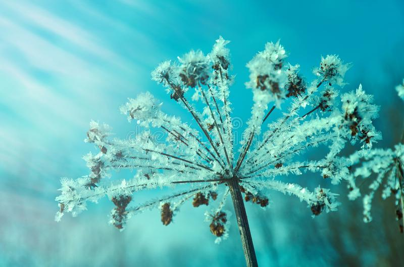 Neve-flores de cristal fotos de stock royalty free