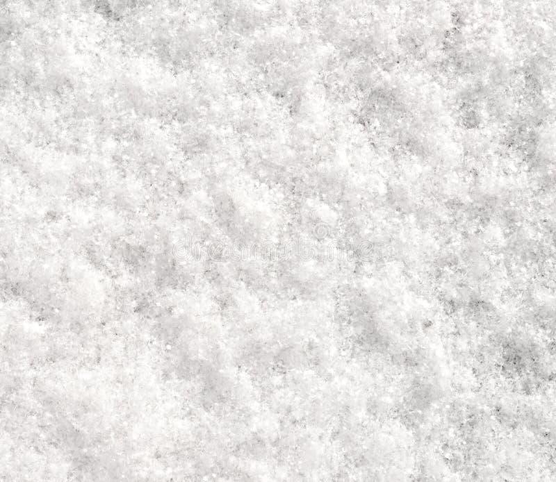 Neve fresca fotografia de stock royalty free
