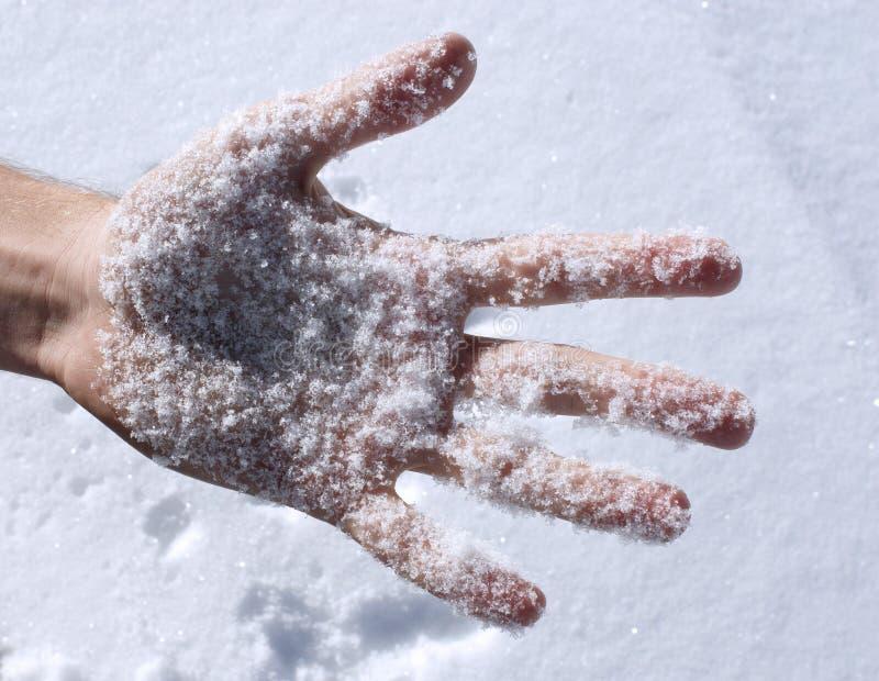 Neve fresca na palma fotos de stock