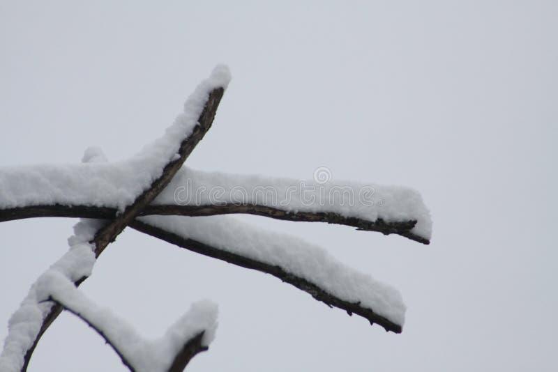 Neve fresca no ramo de árvore fotos de stock royalty free