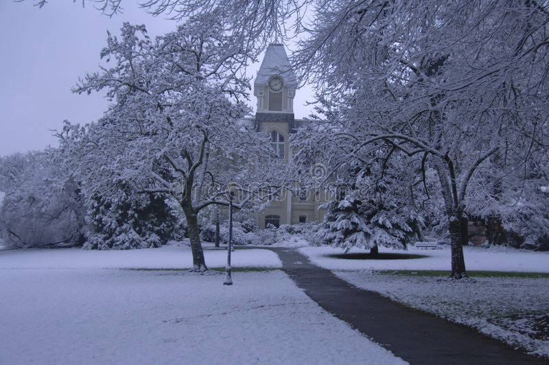 Neve fresca no terreno fotos de stock