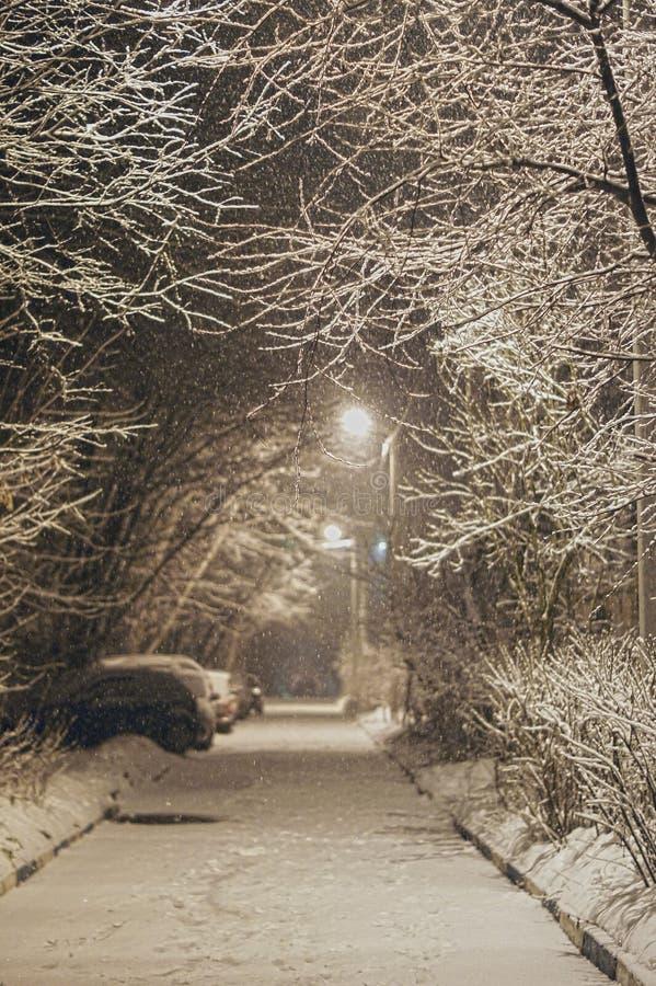 A neve macia cai em um fundo das árvores foto de stock