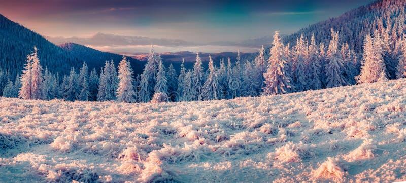 Neve macia que incandesce nos primeiros raios do sol na montanha fotos de stock