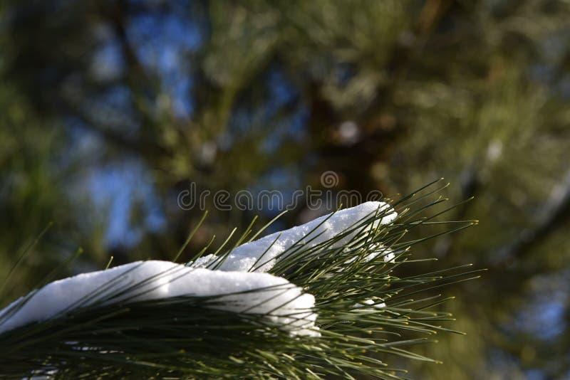 Download Neve na árvore de pinho imagem de stock. Imagem de abeto - 65577639