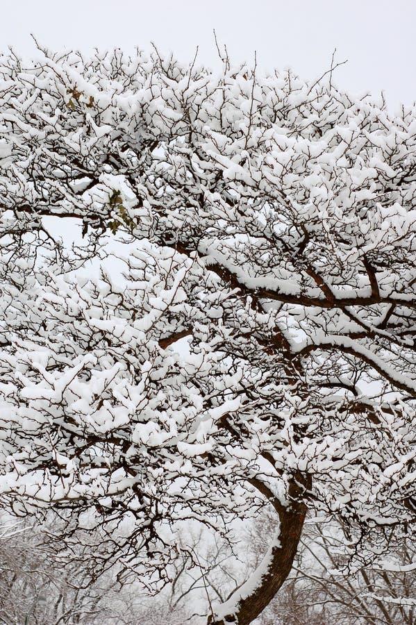 neve na árvore no inverno imagens de stock
