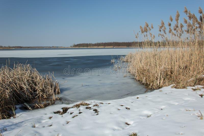 Neve na costa de um lago congelado e de uns juncos altos Horizonte e céu azul foto de stock royalty free