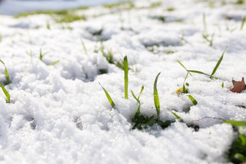 Neve na grama verde fotografia de stock royalty free