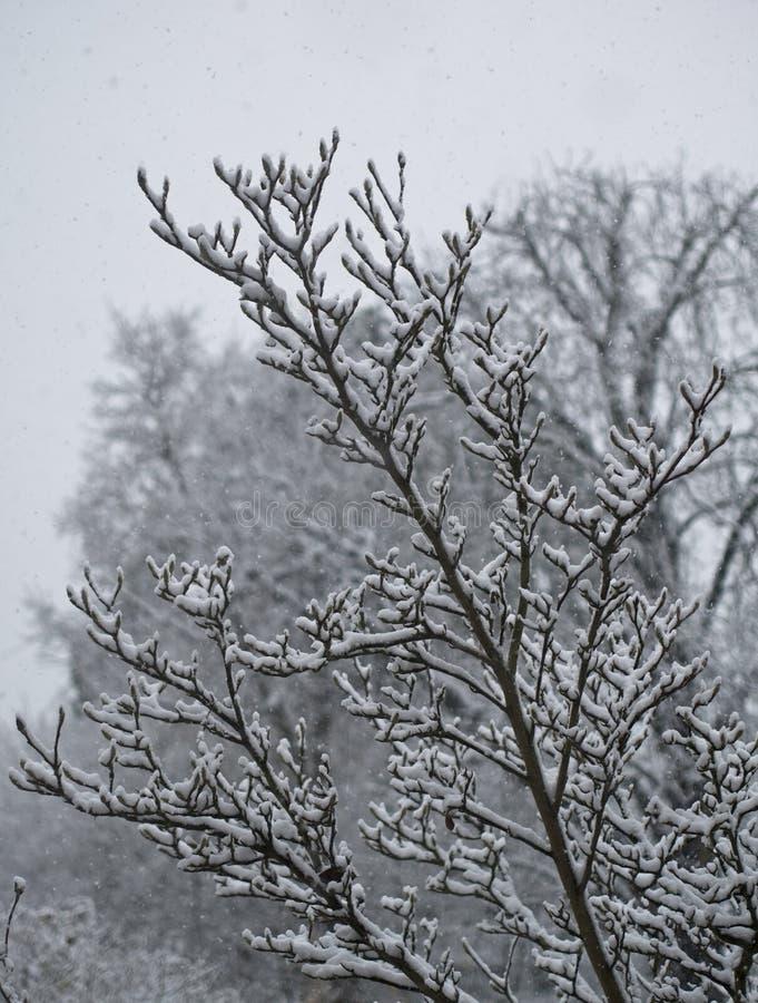 Neve nas árvores, uma imagem de um dia frio no inverno fotos de stock