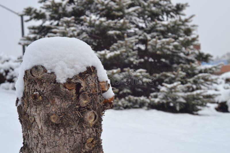 Neve nas madeiras fotos de stock