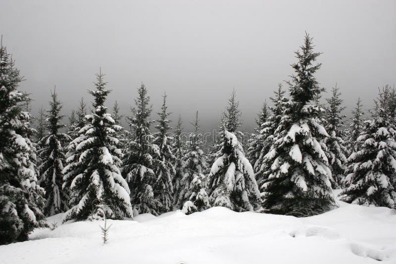 Neve nas montanhas de Harz imagem de stock
