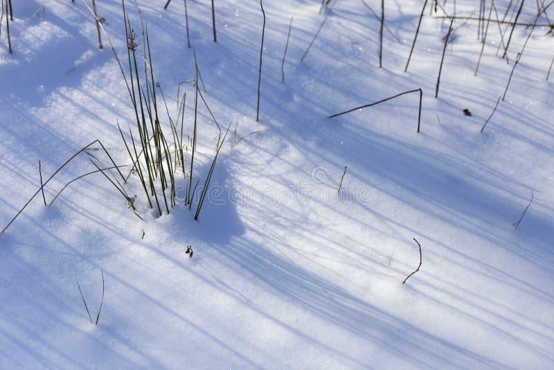 Neve nel giorno di inverno soleggiato luminoso del parco Ci sono ombre di erba sulla neve immagini stock