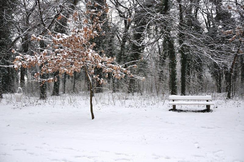 Neve nel parco fotografia stock