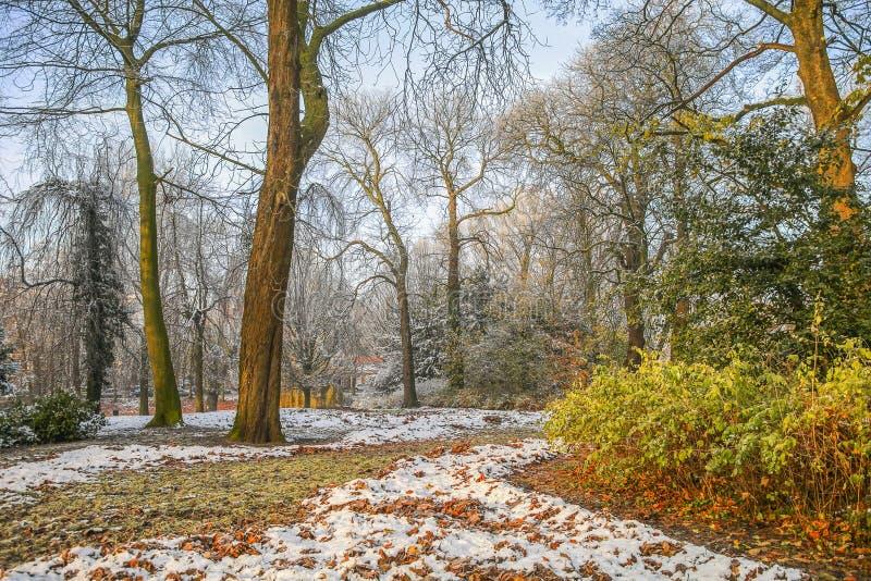 Neve nel parco di autunno immagine stock
