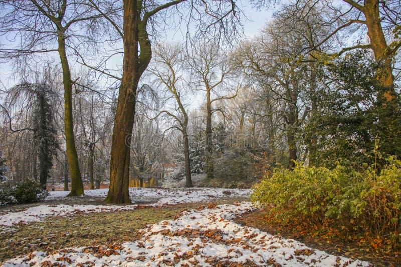 Neve nella sosta di autunno immagini stock libere da diritti