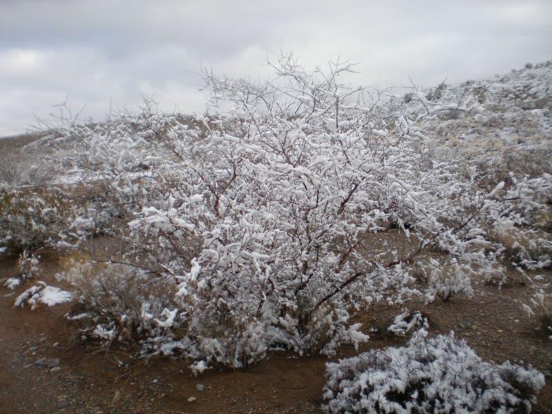 Neve no deserto imagem de stock