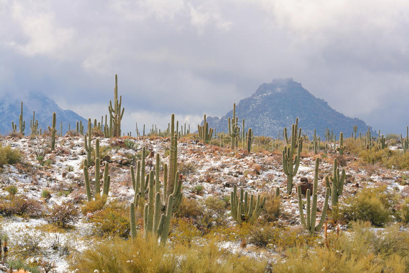 Neve no deserto de Sonoran fotografia de stock