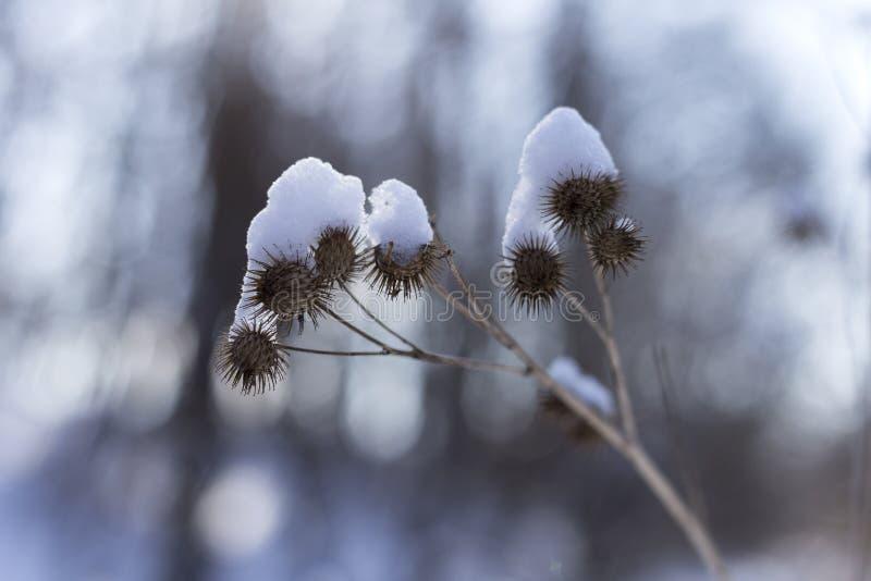 Neve no dia de inverno feliz ensolarado brilhante do parque A neve cobre a planta imagens de stock