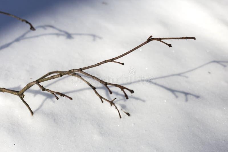 Neve no dia de inverno feliz ensolarado brilhante do parque H? sombras das ?rvores na neve imagem de stock royalty free
