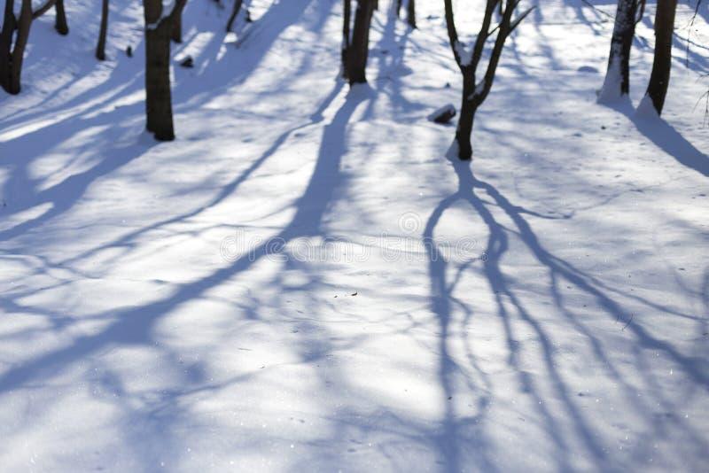 Neve no dia de inverno feliz ensolarado brilhante do parque H? sombras das ?rvores na neve imagens de stock royalty free