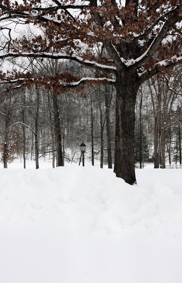 Neve no parque fotos de stock