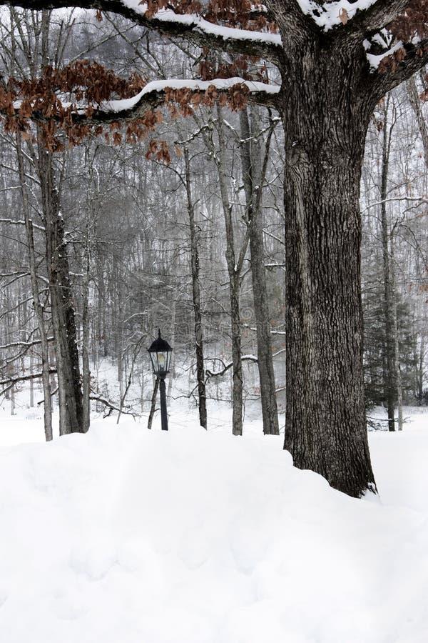 Neve no parque imagens de stock