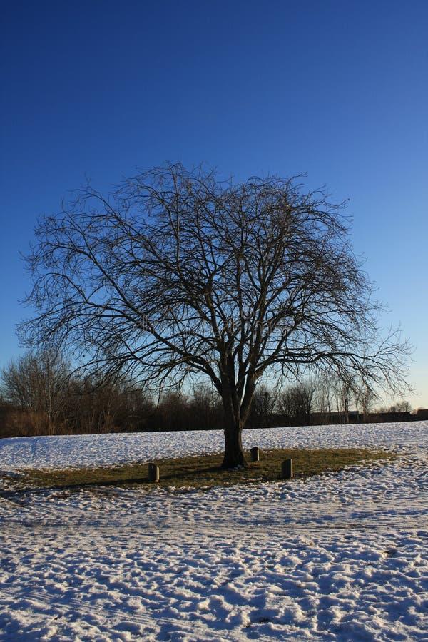 Neve no parque imagem de stock