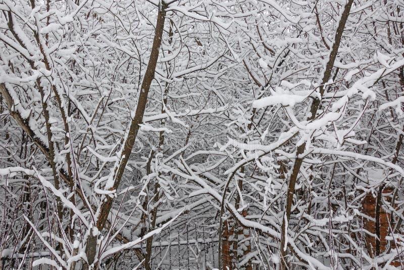 Neve nos ramos de árvore Opinião do inverno das árvores cobertas com a neve A severidade dos ramos sob a neve Queda de neve na na imagem de stock