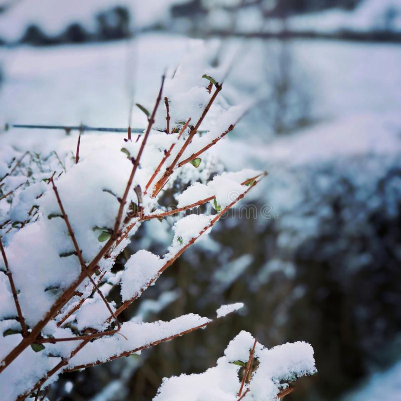 Neve nos ramos na mola adiantada imagens de stock