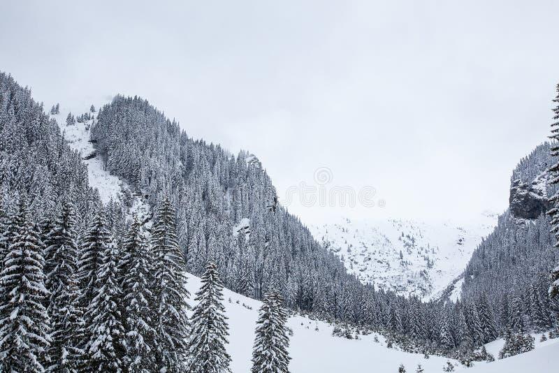 Neve que cai na floresta bonita do pinho coberta com a neve fotos de stock royalty free