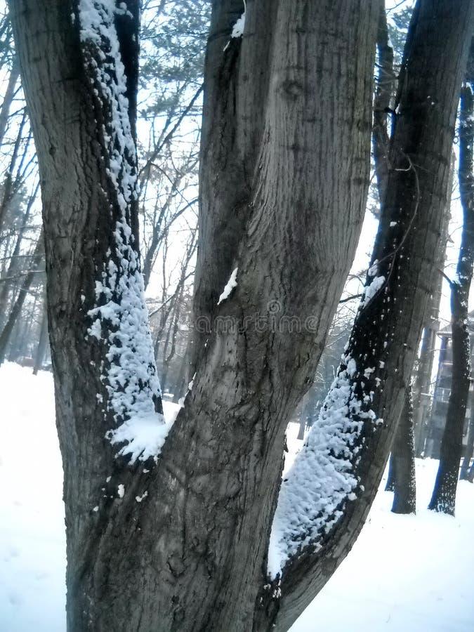Neve su parecchi rami e tronchi di albero immagine stock libera da diritti