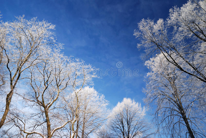 Neve sugli alberi nell'inverno immagini stock libere da diritti