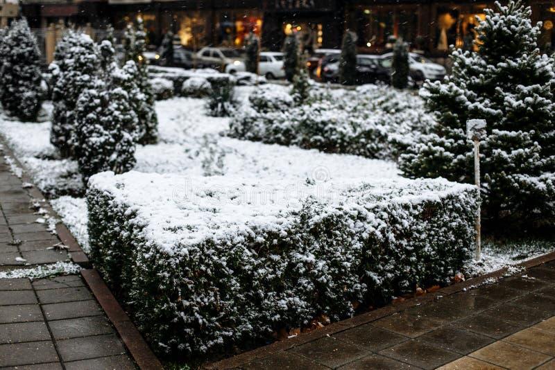 Neve sui cespugli nel parco della citt? immagine stock