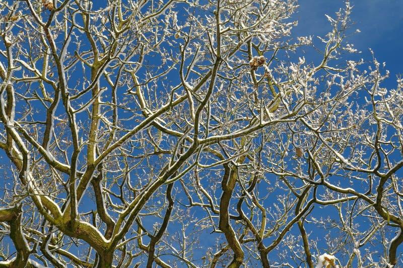 Neve sui rami con il fondo del cielo blu fotografie stock