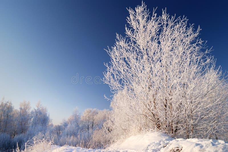 Neve sull'albero fotografie stock