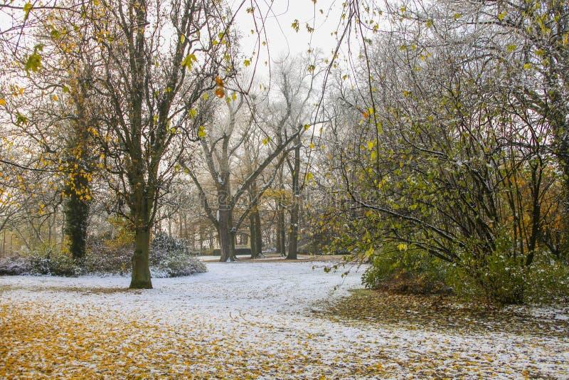 Neve sulla terra in sosta nebbiosa immagine stock libera da diritti