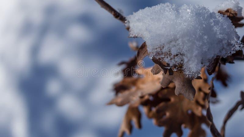 Neve sulle foglie immagini stock