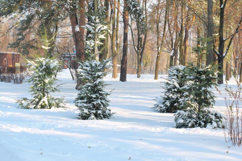 A neve tampou os pinheiros, cobertos por nevadas fortes contra o céu azul uma casa de madeira pequena, dolomites Conceito da paz  foto de stock