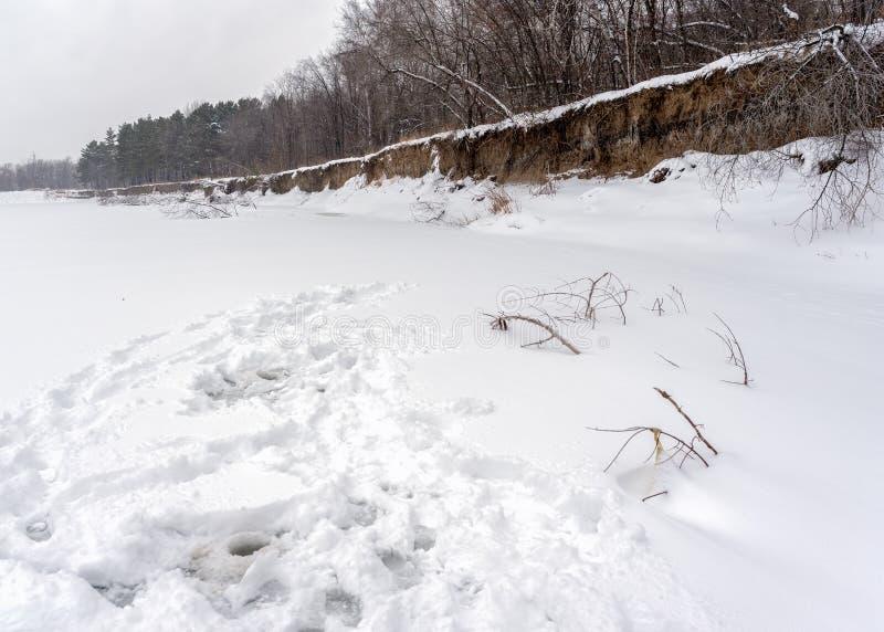 Neve trota con tracce di angler intorno ai buchi sul ghiaccio del fiume invernale provenienti da frantumi e rami di alberi che fu fotografia stock