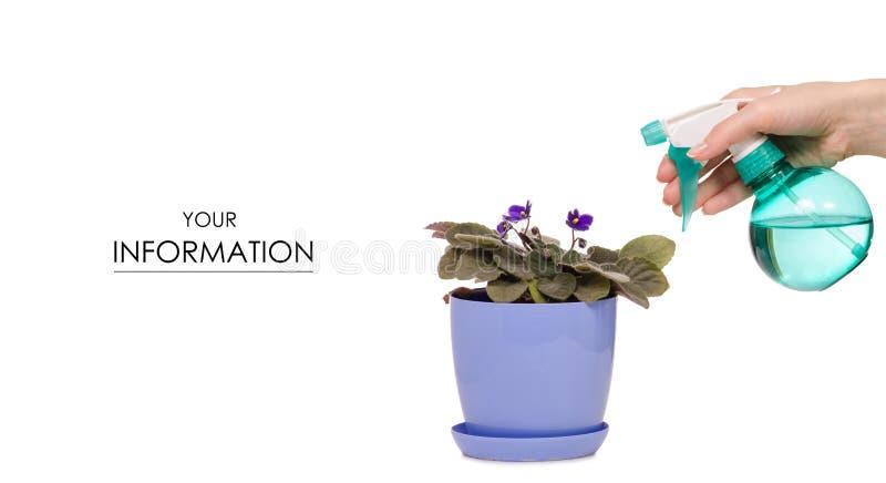 Nevel met waterpulverizer voor violette patroon van bloemen in hand installaties royalty-vrije stock foto